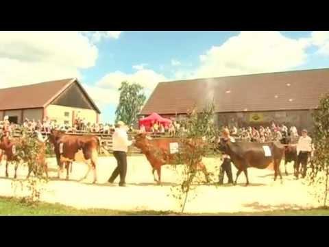 Benefits of Sour Milk | Estonian Dairy Association