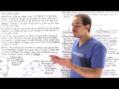 Introduction to Immune System