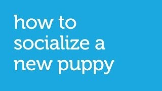 How To Socialize A New Puppy (petco)