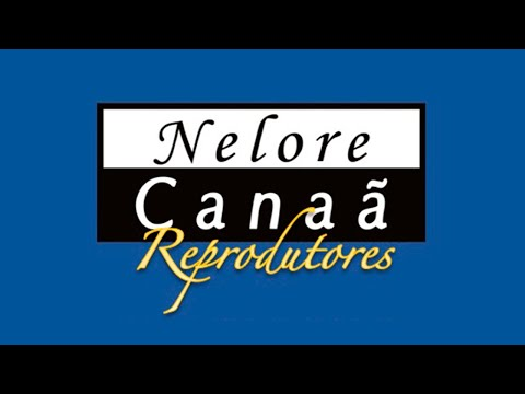 Lote 52   Godan FIV AL Canaã   NFHC 998 Copy