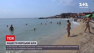 Новини України: у Бердянську відпочивальників дратують морські блохи