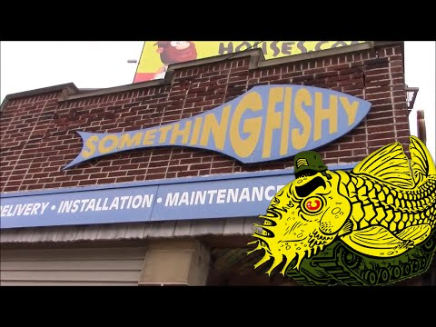 Something Fishy Inc. *** Fish Store Tour Part 1 ***