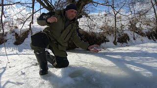 Закрыл зимний сезон хорошей рыбалкой на реке