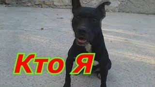 Самая опасная бойцовая собака в мире Питбуль как она относится к детям ??????
