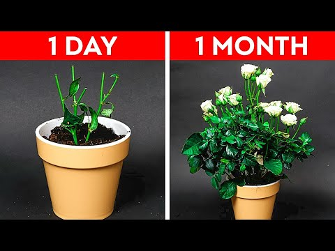 32 Easy Gardening Hacks For Beginners || Plants Growing Tips by 5-Minute DECOR!