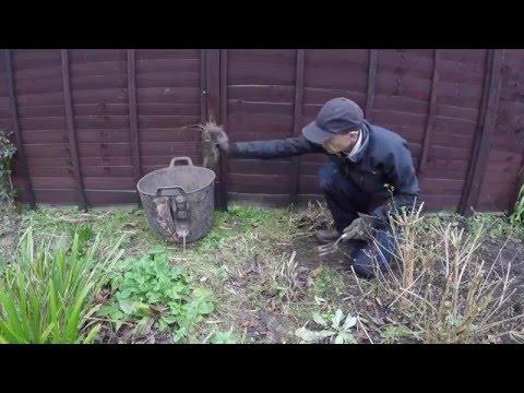 Gopro Gardening - Weeding a flower bed in winter