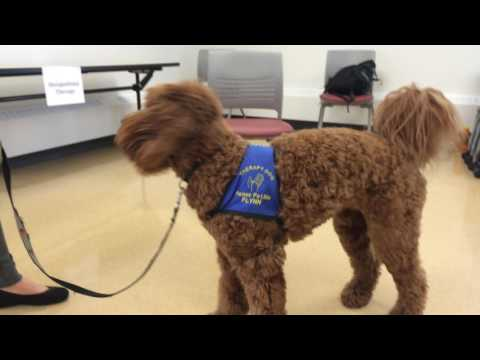 University of Alberta rehab students tout benefits of dogs as therapy tools