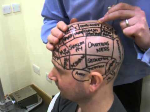 Phrenology Today
