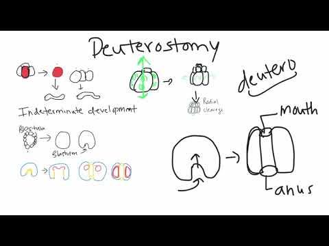 Deuterostomia