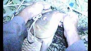 Рыбалка на карпа Ночная поклевка