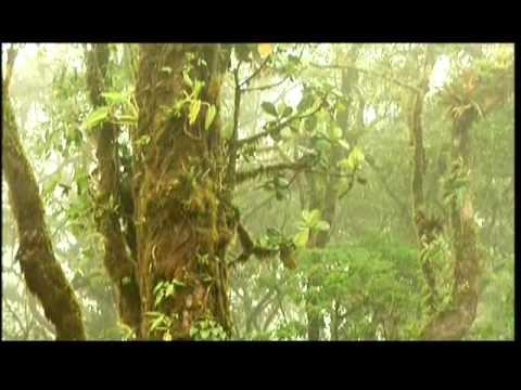 National Geographic - COSTA_RICA - Paraíso Natural - Selubri. de YouTube · Duración:  44 minutos 31 segundos  · Más de 313.000 vistas · cargado el 11.01.2013 · cargado por Jazmín Elaine Lobo
