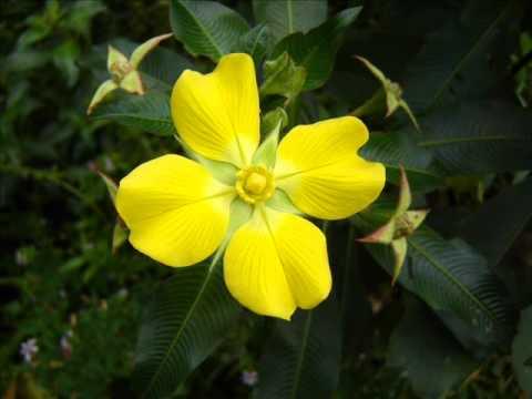 Flores ex ticas youtube - Flores tropicales fotos ...