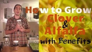 How to Grow Clover & Alfalfa Sprouts - With Benefits