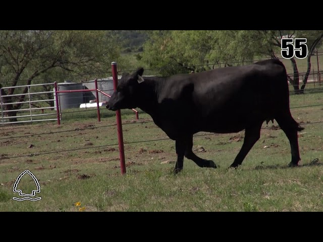 Pearcy Angus Ranch Lot 55