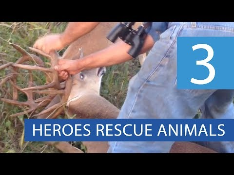 Top 3 Animal Rescues