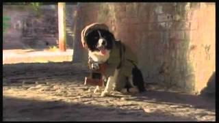 HOT DOG-J
