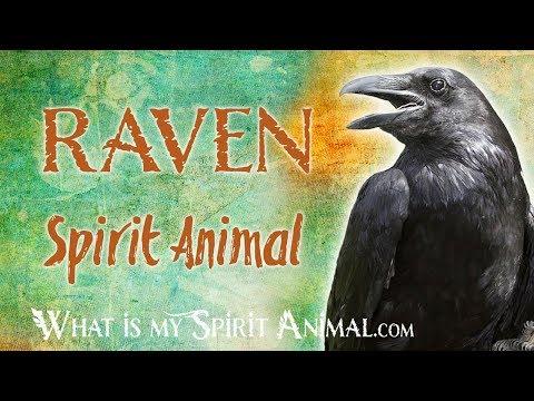 raven-spirit-animal-|-raven-totem-&-power-animal-|-raven-symbolism-&-meanings