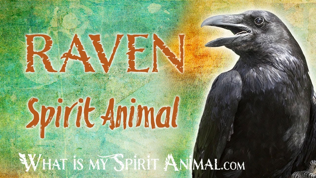 Raven Spirit Animal Raven Totem Power Animal Raven Symbolism