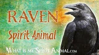 Raven  Spirit Animal   Raven Totem & Power Animal   Raven  Symbolism & Meanings