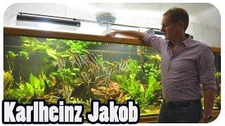 Altumskalare und Garnelen bei Karlheinz | Deutschland, Deine Züchter