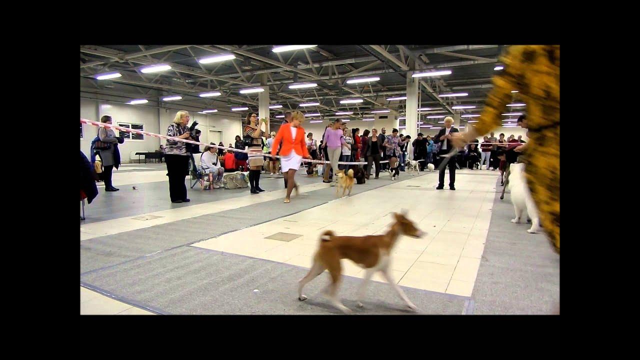 Продаются щенки Йоркширского терьера (мальчики) - YouTube