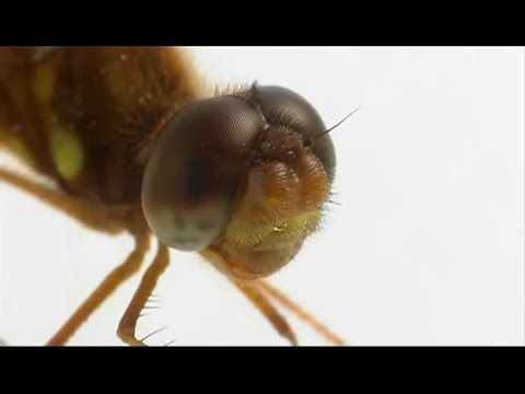 EVOLUTION  How eyes evolved HD