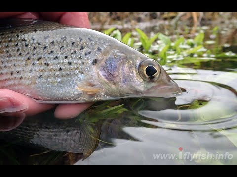 Broadlands The River Test Grayling Land