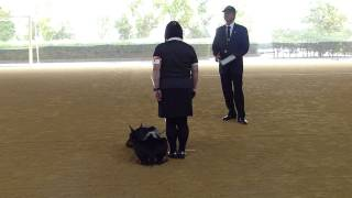 説明 初めて訓練競技会に出ました。 憧れの ドラゴンハット。 もっと緊...