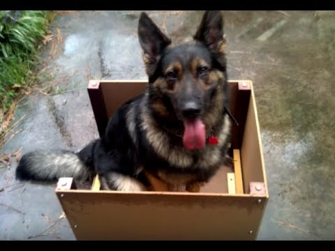 Dog With Degenerative Myelopathy (DM) Walks Again!