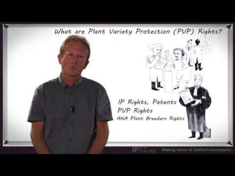 What are Plant Variety Protection Rights?