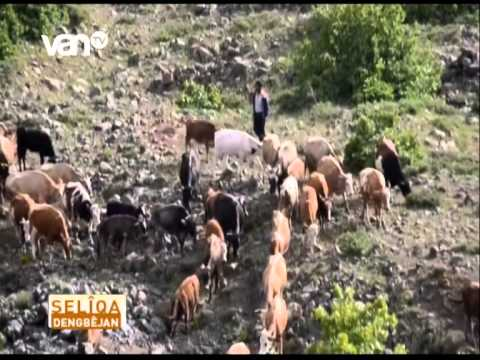 Download İSMAİL SEYRANOĞLU XECOKE VAN TV