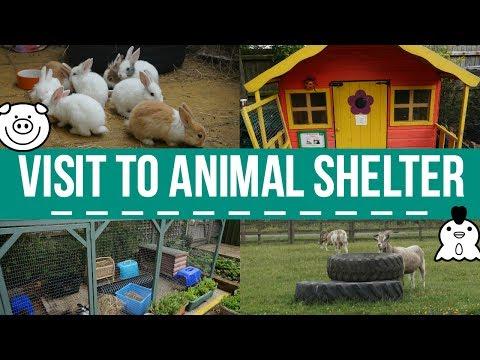 Visit To Animal Shelter (Wood Green)