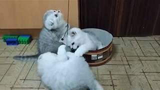 СМЕШНЫЕ КОТЯТА БЕСЯТСЯ😻 МИЛЫЕ КОТЯТА МАЛЬЧИКИ ИГРАЮТ 🐱 ИГРУШКИ ДЛЯ КОТЯТ Kitten  Cat