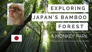 Japan Bamboo Forest and Monkey Park in Amazing Arashiyama, Kyoto