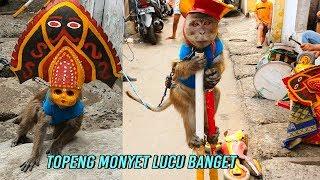 Video Topeng Monyet LUCU Bikin Ngakak - Funny monkey download MP3, 3GP, MP4, WEBM, AVI, FLV November 2018