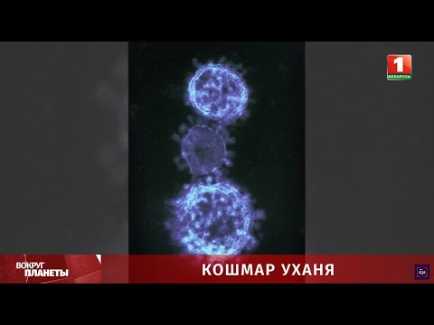 Коронавирус: передаётся ли