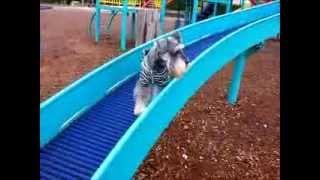 我が家のジャック君は滑り台が得意です。近所の公園の滑り台は全て制覇...