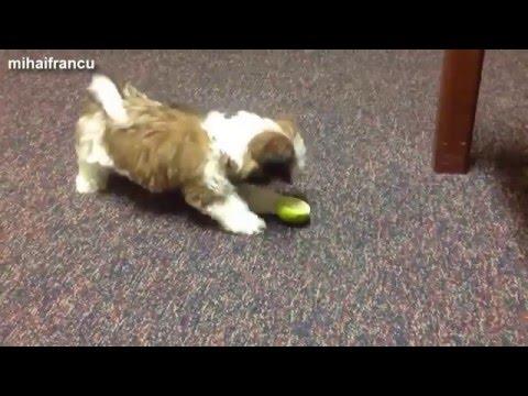 Смешные собаки - YouTube