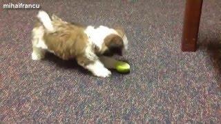 смешная собачка видео