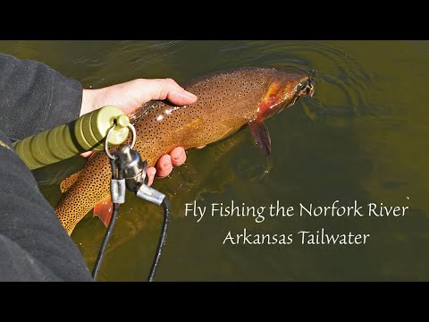 Fly Fishing The Norfork River And Tips For Nymphing