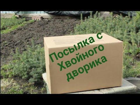 """Посылка с нашего питомника """"Хвойный дворик"""""""