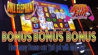 BONUS after BONUS after BONUS!!! How many Bonus can Yuri get with MAX BET!!  Bull Elephant