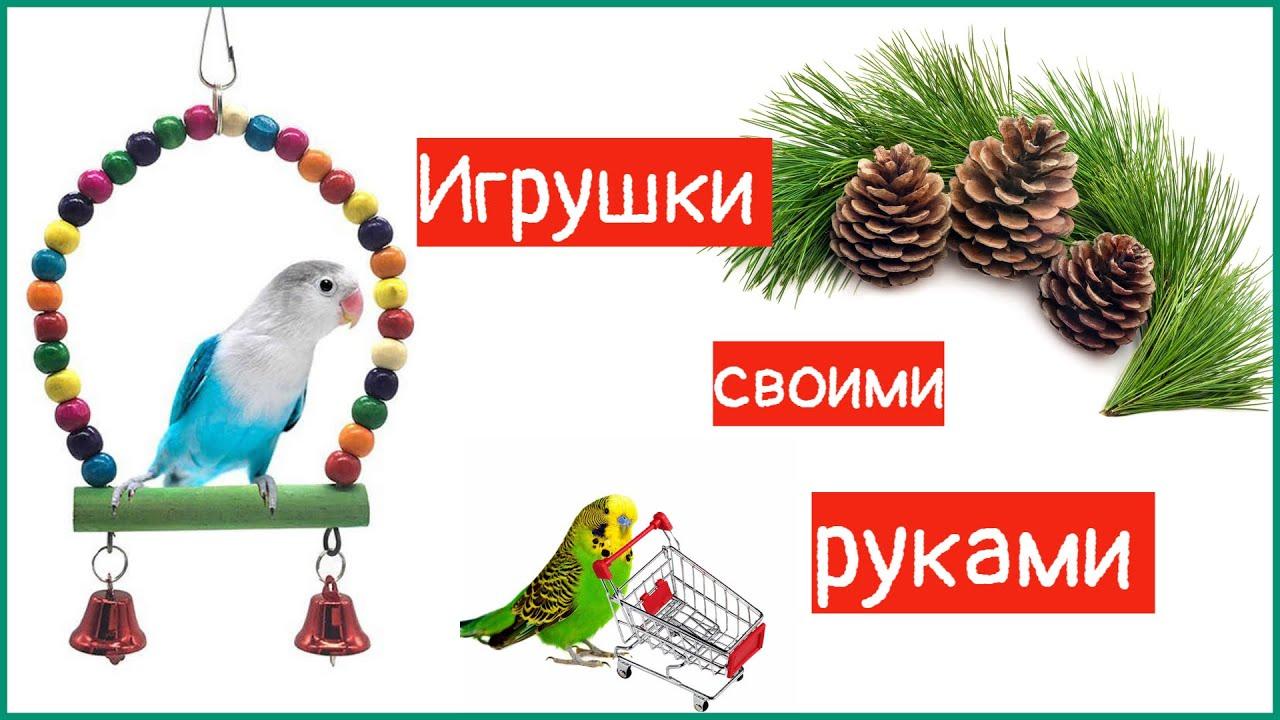 Игрушки ДЛЯ попугая СВОИМИ руками ИЗ шишек! - YouTube
