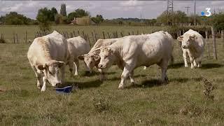 """L'association L214 se mobilise à Grenoble """"pour en finir avec l'élevage intensif"""""""