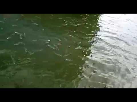 Пелингас порт Темрюк