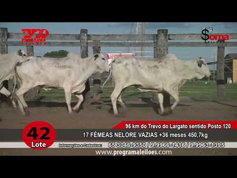 LOTE R42