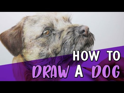 how-to-draw-a-dog-|-coloured-pencil-tutorial