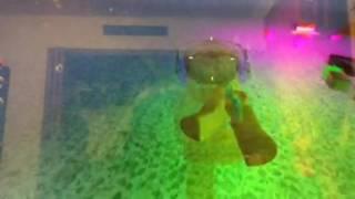 Sponge bob square pants in ROBLOX