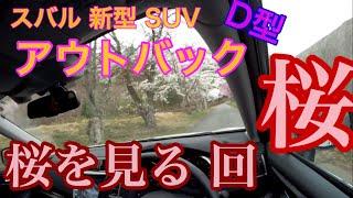 都内では桜が散ってしまった4/7にOUTBACK TVは桜見物を兼ねてゴールデ...