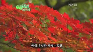 국립수목원 / YTN (Yes! Top News)
